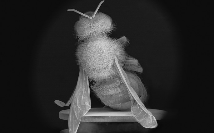 No Vertical Song   The Dead Bee Portraits # 2, 2015, Pigment print on Canson baryta paper