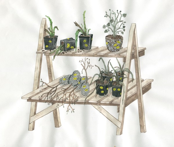 Zina Swanson, Plants from the sale drawing (artist concept sketch), 2016