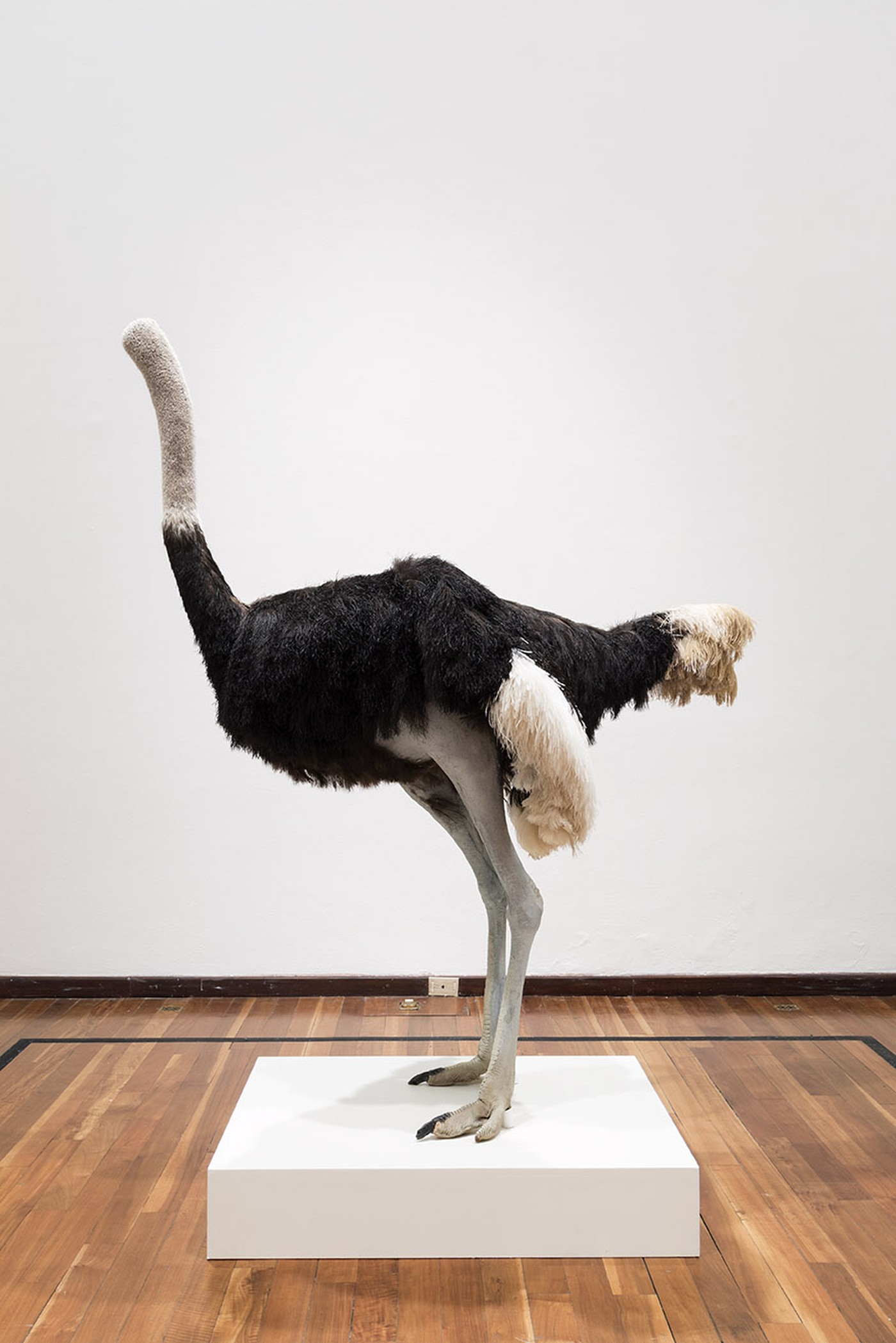 David Shrigley: Lose Your Mind. Ostrich, 2009 at Instituto Cultural Cabañas, Guadalajara, Mexico, November 2015. © David Shrigley. Courtesy of Instituto Cultural Cabañas and British Council. Photo by Marcos García